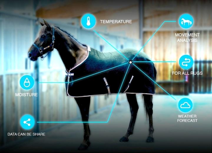 Derkowanie na miarę końskichpotrzeb?